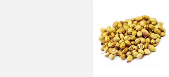 Shanson Exports : An Exporter Of Coriander Seeds, Coriander Seeds Exporter, Coriander Seeds Supplier, Coriander Seeds Producer, Coriander Seeds Sortex Quality, Coriander Seeds Ahmedabad, Coriander Seeds Exporter Gujarat, Coriander Seeds Exporter India.