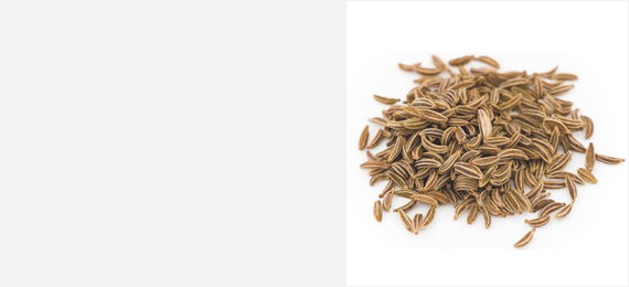 Shanson Exports : An Exporter Of Cumin Seeds, Cumin Seeds Exporter, Cumin Seeds Supplier, Cumin Seeds Producer, Cumin Seeds Singapore Quality, Cumin Seeds Europe Quality, Cumin Seeds Ahmedabad, Cumin Seeds Exporter Gujarat, Cumin Seeds Exporter India.