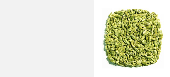 Shanson Exports : An Exporter Of Fennel Seeds, Fennel Seeds Exporter, Fennel Seeds Supplier, Fennel Seeds Producer, Fennel Seeds Singapore Quality, Fennel Seeds Europe Quality, Fennel Seeds Ahmedabad, Fennel Seeds Exporter Gujarat, Fennel Seeds Exporter India.