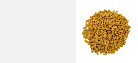 Shanson Exports : An Exporter Of Fenugreek Seeds, Fenugreek Seeds Exporter, Fenugreek Seeds Supplier, Fenugreek Seeds Producer, Fenugreek Seeds Sortex Quality, Fenugreek Seeds Machine Clean Quality, Fenugreek Seeds Ahmedabad, Fenugreek Seeds Exporter Gujarat, Fenugreek Seeds Exporter India.